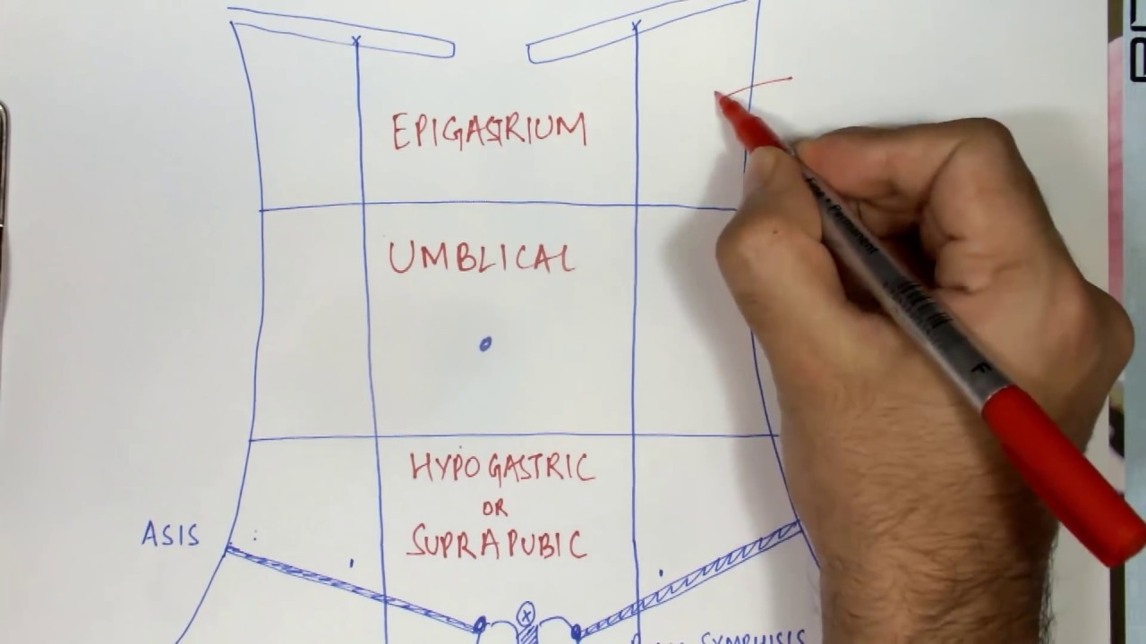 9 regions of abdomen made simple youtube diagram of epigastrium [ 1280 x 720 Pixel ]