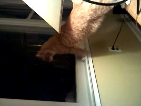 Taz the Cat