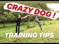 5 TRAINING TIPS | AUSTRALIAN CATTLE DOG (BLUE HEELER)