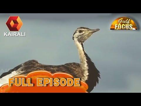 Gulf Focus പൊന്നപ്പനെ തിരിച്ചറിഞ്ഞു | 13th May 2018 | Full Episode