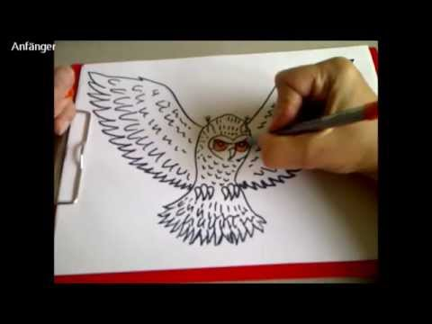 eule zeichnen zeichnen lernen f r anf nger how to draw an owl for kids adults youtube. Black Bedroom Furniture Sets. Home Design Ideas