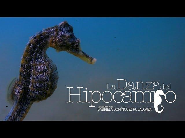 La Danza Del Hipocampo Trailer Youtube