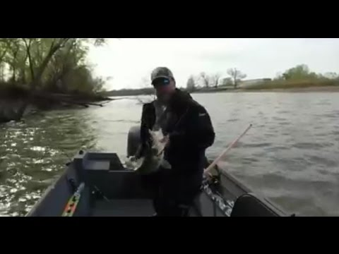 30 inch walleye mo river missouri youtube for Walleye fishing in missouri