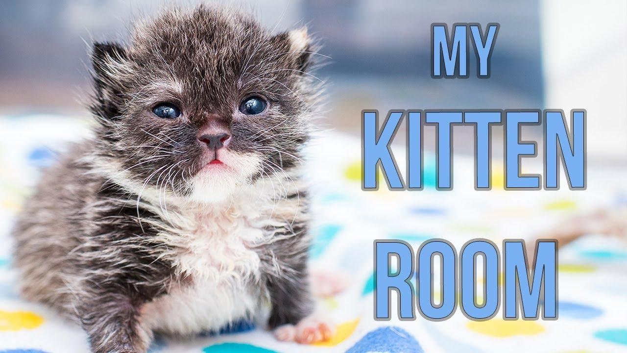 Sneak K Inside My Kitten Nursery