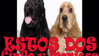 This Video Previously Contained A Copyrighted Audio Track. Due To A Claim By A Copyright Holder, The Audio Track Has Been Muted.     Hailstone´s Cockers - Cocker Spaniel Ingles - English Cocker Spaniels