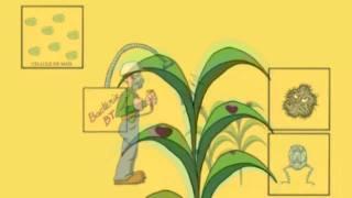 (GDO)BT Mısır için bir animasyon