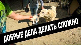 ЗООШИЗИКИ Настоящие ДОБРЫЕ ДЕЛА делать СЛОЖНО Собаки и Кошки