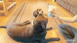 Honest Paws Calming CBD Dog Treats Review