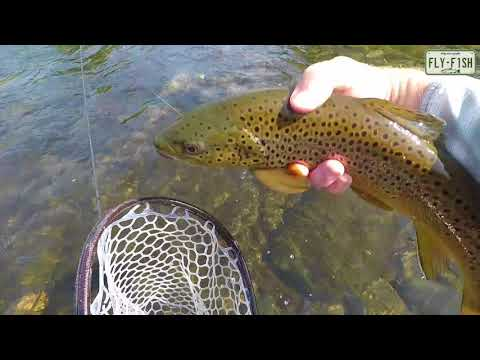 Fly Fishing - Friday June 13 2018 - West Canada Creek