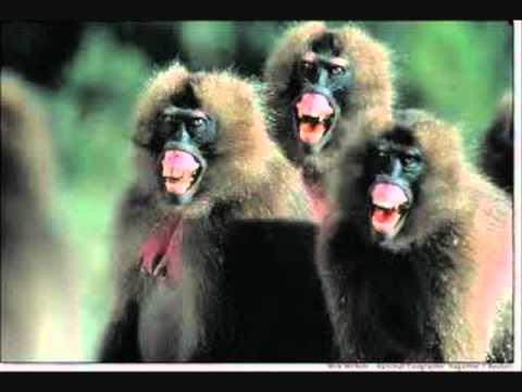 99 Dead Baboons