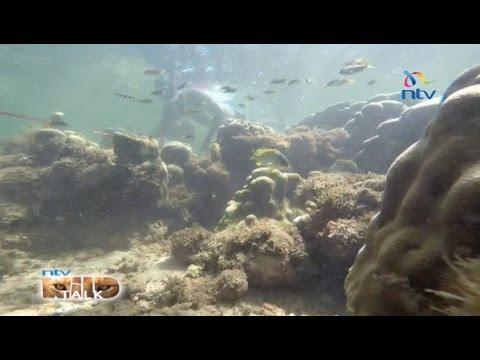 "NTV Wild Talk S4 E7: ""Reef Rangers"""