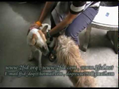 Dog rescue 191 Nasal cartilage tumor