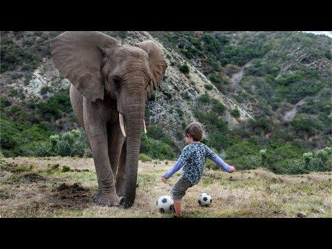 Boy Plays Football With A 3-Tonne Elephant