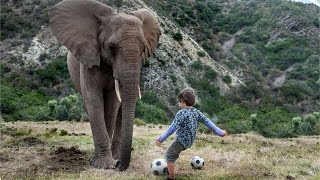Boy Plays Football With A 3-Tonne Elephant