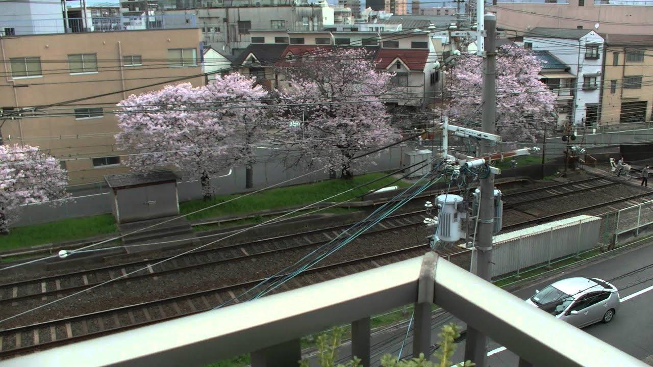 Fiori Japan.Japan Kyoto Giappone Fiori Di Ciliegio Sakura In Real Life Youtube