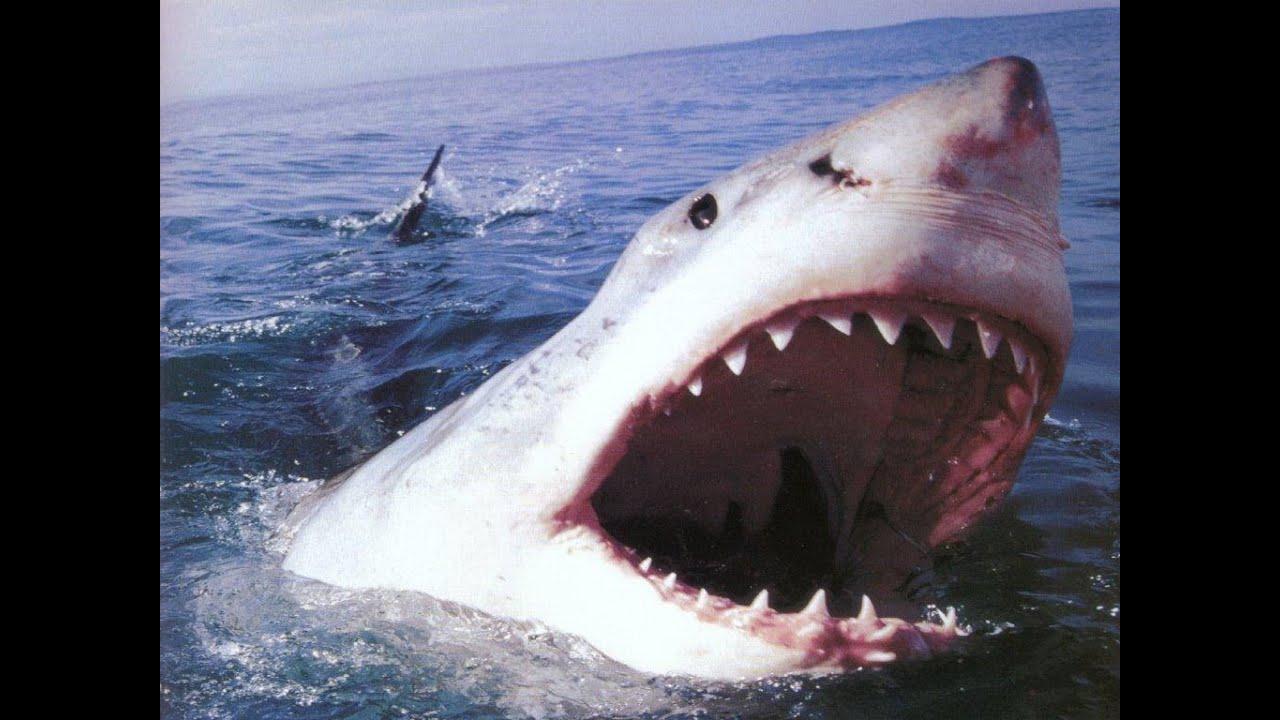 Мужчине, смешные картинки про акул с надписями