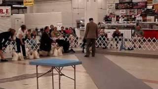 Atlanta Ga Shih Tzu Specialty - Shih Tzu Puppies For Sale Ga Fl Al Tn Sc Nc - Shihtzuga.weebly.com