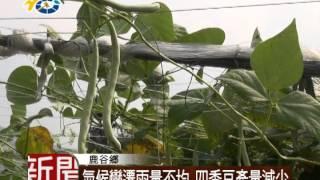 1030709 氣候變遷雨量不均 四季豆產量減少 thumbnail
