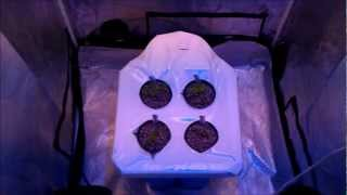 Grow Lab 80 Indoor Peppers