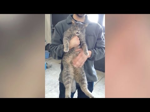 Funny CrAzY ANIMALS! - Brace yourself for new DOSE of LAUGH!