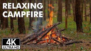 4К Звук костра в лесу. Для снятия стресса, расслабляющий огонь
