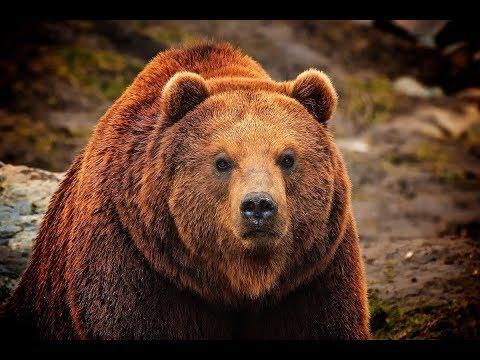 СТРАШНАЯ История - Медведь против ОБОРОТНЯ