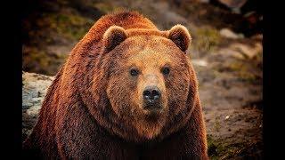 Медведь против ОБОРОТНЯ ( История времён ВТОРОЙ МИРОВОЙ )
