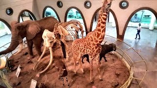 Things To Do In Nairobi | Nairobi Museum