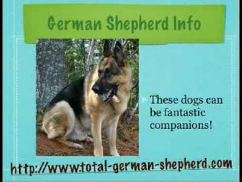 So you think you want a German Shepherd, huh?
