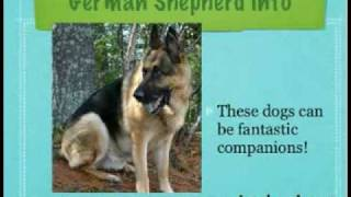 So You Think You Want A German Shepherd, Huh?