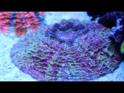World Wide Corals - Orlando, Florida [Local Fish Store Travel Ep. 2]