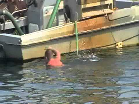 Pijany Anglik Na Poole Quay Cz.I.Drunk Man Is Swimming Next To The Lifeboat Museum,part I