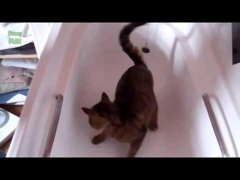 Смешное видео про красивую русалку