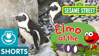 Sesame Street: Animal Friends At The Zoo (Elmo At The Zoo #5)
