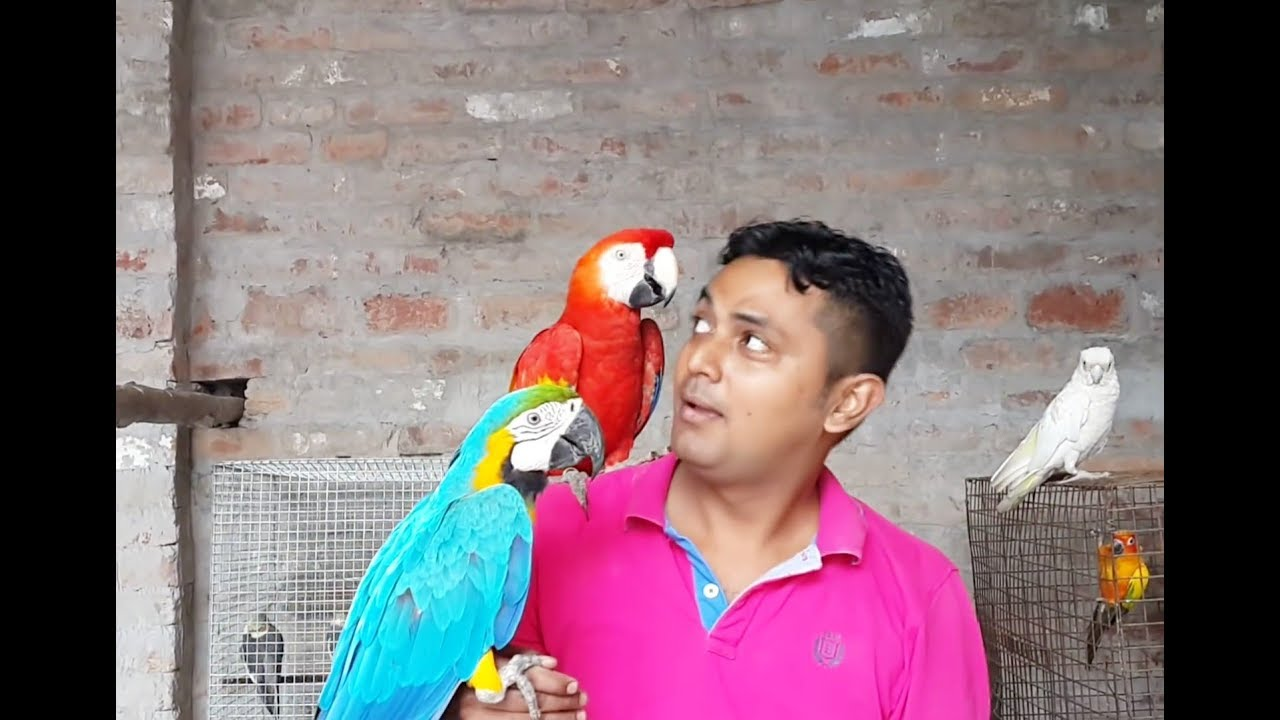 Macaw in kolkata price and all details