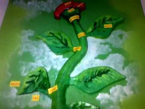 Flor de paja - 5 6