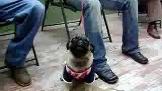 Pug I Love You Perro Chiva Que Habla (bofo)