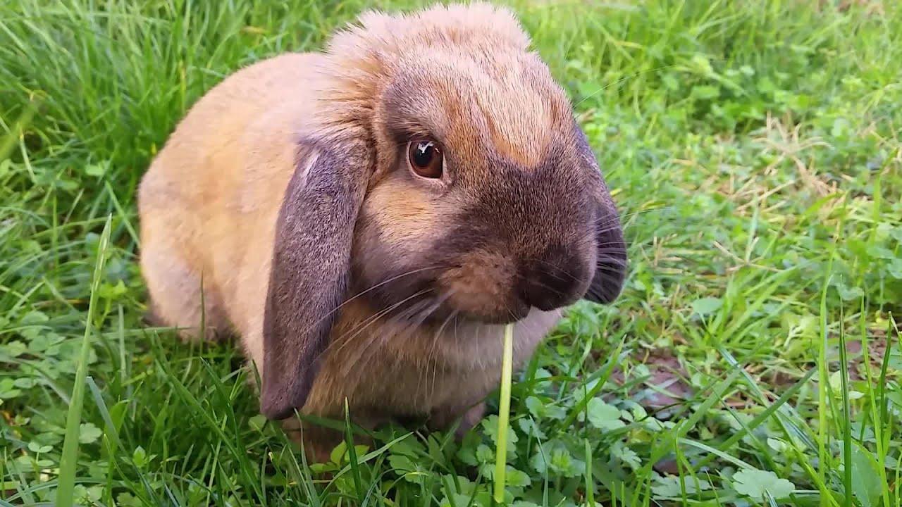 Mignon lapin b lier qui mange de l herbe dans le jardin youtube - Coup de belier dans tuyauterie ...