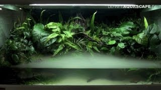 Aquascaping - The Art of the Planted Aquarium 2013 XL, pt.5