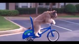 Держатель телефона для велосипеда !!! onetto каждому!!!