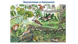 Экосистема и биоценоз