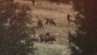 Bull Elk Sounds: Bugles, Barks, Grunts and More