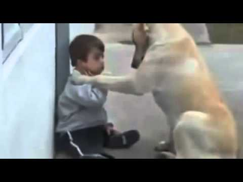 friend-dog-comforts-cute-kid-chien-doux-confort-enfant-mignon-כלב-מנחמת-את-הילד
