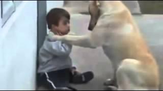 Friend dog comforts cute kid Chien doux confort enfant mignon  כלב מנחמת את הילד