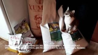 Неделя сытых животиков и компания Yummi Накормим приют для животных Дари добро вместе.