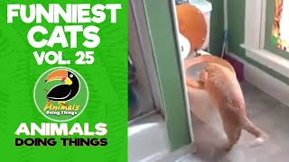 😺Funniest Cats Compilation Vol. 25 | Animals Doing Things