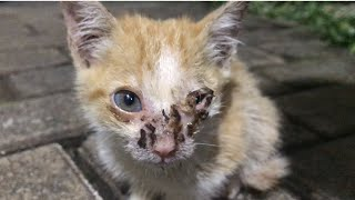 Skinny and starving kitten with his left eye infection