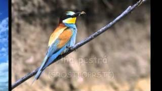 Hlasy okolo nás: Ptáci - 1