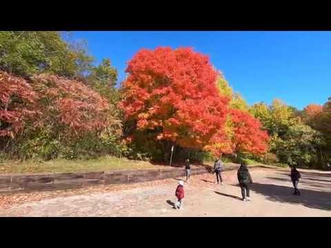 Dundas Peak 2019 AMAZING AND BREATHTAKING SCENIC VIEWS ONTARIO, CANADA Fall Season.