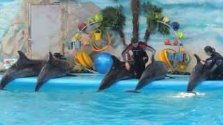 Дельфинарий, Минск танцующие дельфины!!!(2014 март Минск танцующие дельфины!!!, 2014-03-12T18:52:57.000Z)